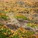 Auf der Vulkanerde wächst ein etwas spezieller aber hervorragender Wein