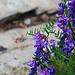 Der Mini-Kolibri lässt sich nicht stören