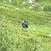 [u Jules], ontanelli e rododendri nei 400 metri di discesa selvaggia