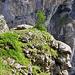 Kurz vor der Unteren Schmitte, Abzweigung zum Daubenhorn-Klettersteig