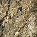 Vogel-Hotel in der Felswand
