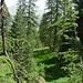 Weiter auf dem nicht markierten Weg durchs Val da la Blaisch