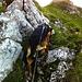 Berghund im Aufstieg