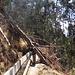 Im Eukalyptuswald