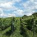 Weinberge in Richtung Alsbach