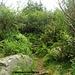 Gemütlich geht es zwischen den Büschen bergwärts