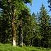 Traumhafte Bäume