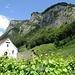 Der Regitzer Spitz trohnt über Fläsch. Seine südlich ausgerichteten Felswände unterstützen den Reifungsprozess der Trauben im Tal.