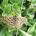 Una farfalla tra le gocce di pioggia