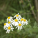 Questi fiori rappresentano perfettamente il mio stato d'animo di oggi
