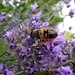 hübsch, das Insekt auf den Blumen