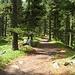 Finalmente un pò di sole illumina i meravigliosi boschi della Val Roseg