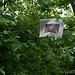 Sonntagszeitung im Baum