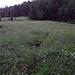 Zuerst durch nasses Gras...