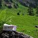 Super Käse auf der Alp Underberg gekauft
