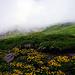 Bergfrühling im Nebel...