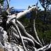 Wilder Abstieg vom Alp Sigel nach SSW