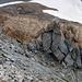Natürlicher Steinmann, Blick auf das Rötidolomitband, das untere und obere Fuorcla da Punteglias trennt