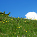 Herrliche Blumenwiesen