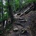 Unten sieht der Wald übel aus… Lothar?