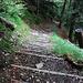 Über Treppen den Wald hinauf