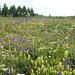 Prato fiorito sopra Grand Puy