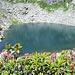 Lago Melo tra i rododendri in fiore
