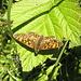 Inizia lo show delle farfalle