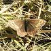 Continua lo show delle farfalle