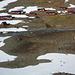 Fast geschafft – die roten Hütten von Tarafala stehen noch immer hier, die Rentiere machen sich aus dem Staub