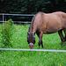 Pferd mit Mütze