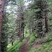 Zunächst führt der Wanderweg am Kurhaus vorbei durch den Wald