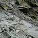 Leiter zum Pas de Chevres 2855 m