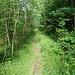 auf dem Weg zum Forsthaus