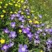 Prächtige Blumenwelt