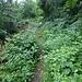 Der schmale Steig zur Ruine Grottenstein
