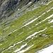 Viele Gämsen im Abstieg von Studlhutte.