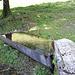 La fontana della Foppa