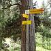 Viele Wege führen nach Grächen
