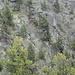 Bemerkenswerte Risse in den Felsen