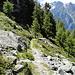 Hier gehts in den Grächenwald hinein