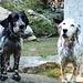 Die guterzogenen und lieben Jagdhunde von Pronzolo