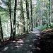 stimmungsvoller Waldweg