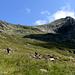 Seguendo sempre la AVL raggiungiamo i ruderi dell' Alpe Paina, seguiamo ancora per poco i segni di vernice per poi deviare in libera (non c'e' sentiero segnalato per il Cardinello).