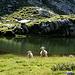 Madre e figlio al laghetto piccolo del Roggio