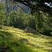 morgendliche Waldgrenze vor Siwibode