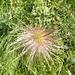 Anche questo è un fiore... (cosa sia, lo ignoro...)