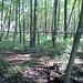 Mischwald, typisch für den Grunewald, in der Senke zwischen dem Hundekehlefenn und dem Grunewaldsee.