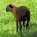 schwarzes Schaf`?