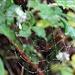 nasses Spinnennetz